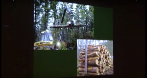 den-kultiverede-skov